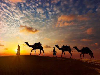 Routemate_Rajasthan_Udaipur_Desert_Camel